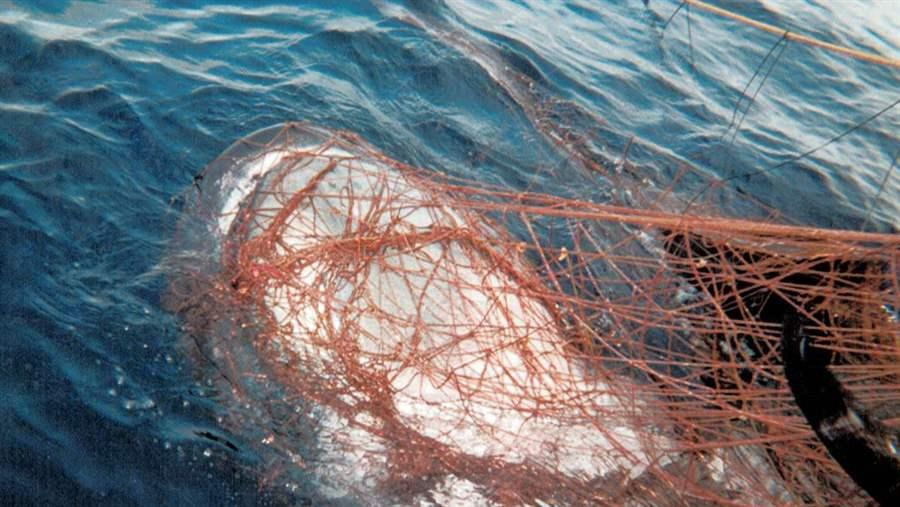 Bycatch in the Pacific