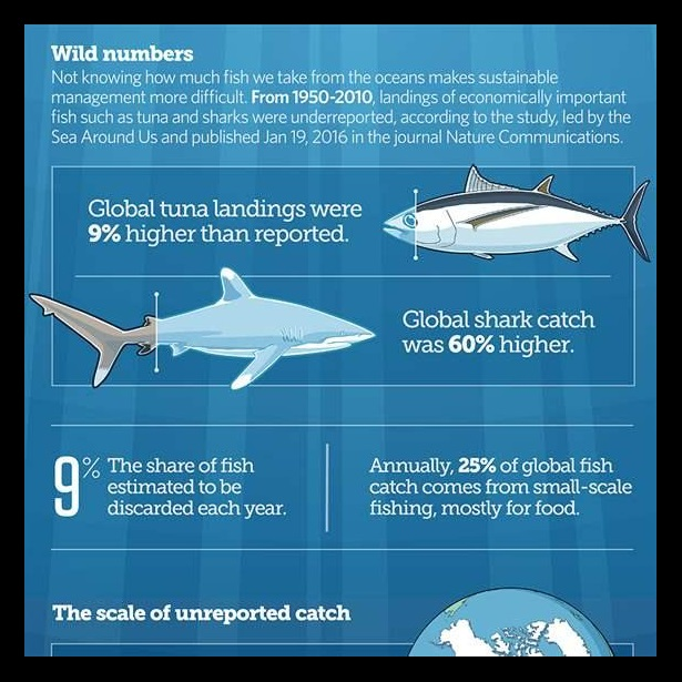 How Much Fish are We Really Catching?