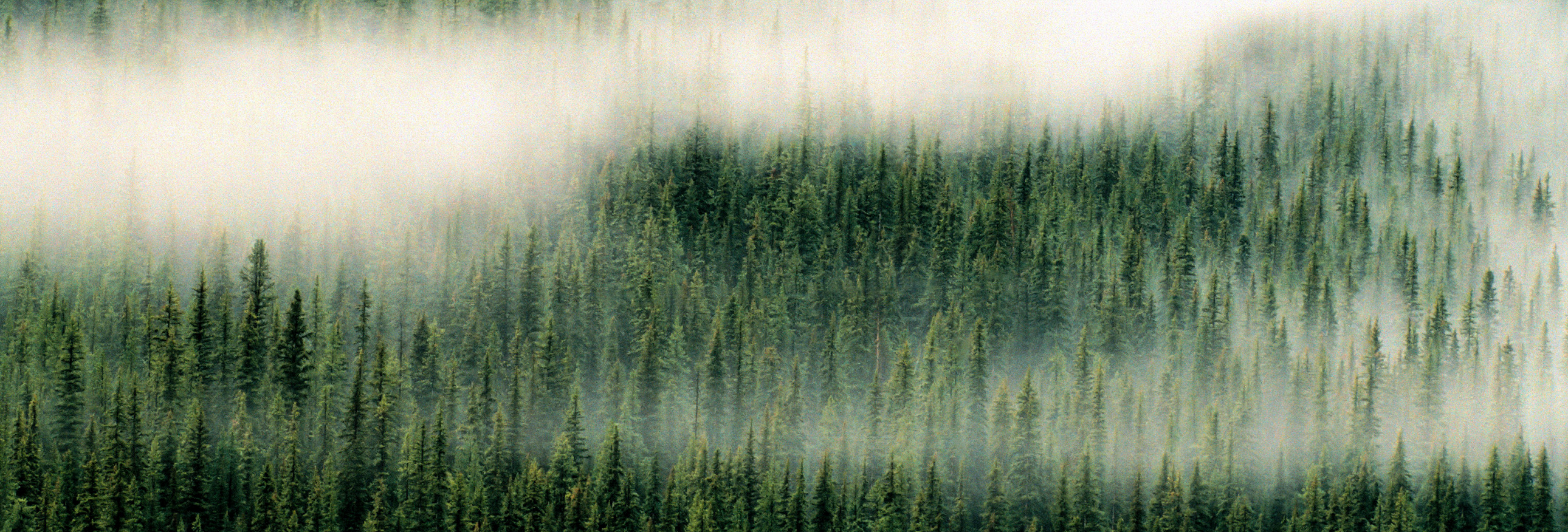 aerial view of forest in fog
