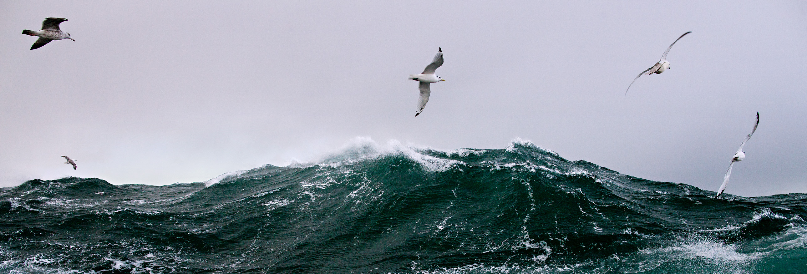 seagulls flying above rough waters