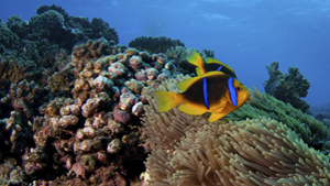 The waters around French Polynesia are home to 21 species of sharks and an exceptional coral reef system.