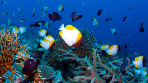 Australia's Coral Sea, located east of the world-renowned Great Barrier Reef.