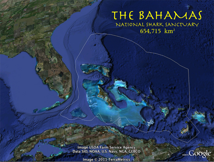 Bahamas Shark Sanctuary