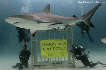 Sharks Now Protected