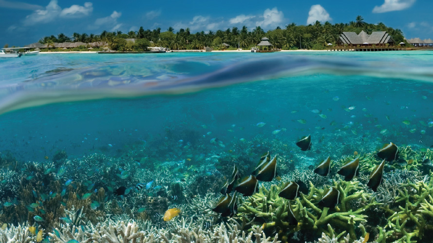 Coral Reefs Reduce Risks From Natural Hazards