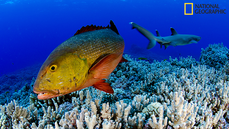 The expedition team encountered a school of curious red snappers.