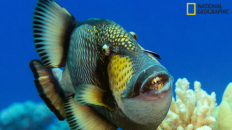 This triggerfish may have a comical appearance, but the wavelike motion of its fins and the peaceful inter-species partnership it's displaying with the cleaner fish below its eyes add an unexpected level of beauty and inspiration.