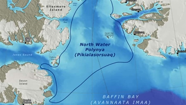 North Baffin and North Water (Polynya)