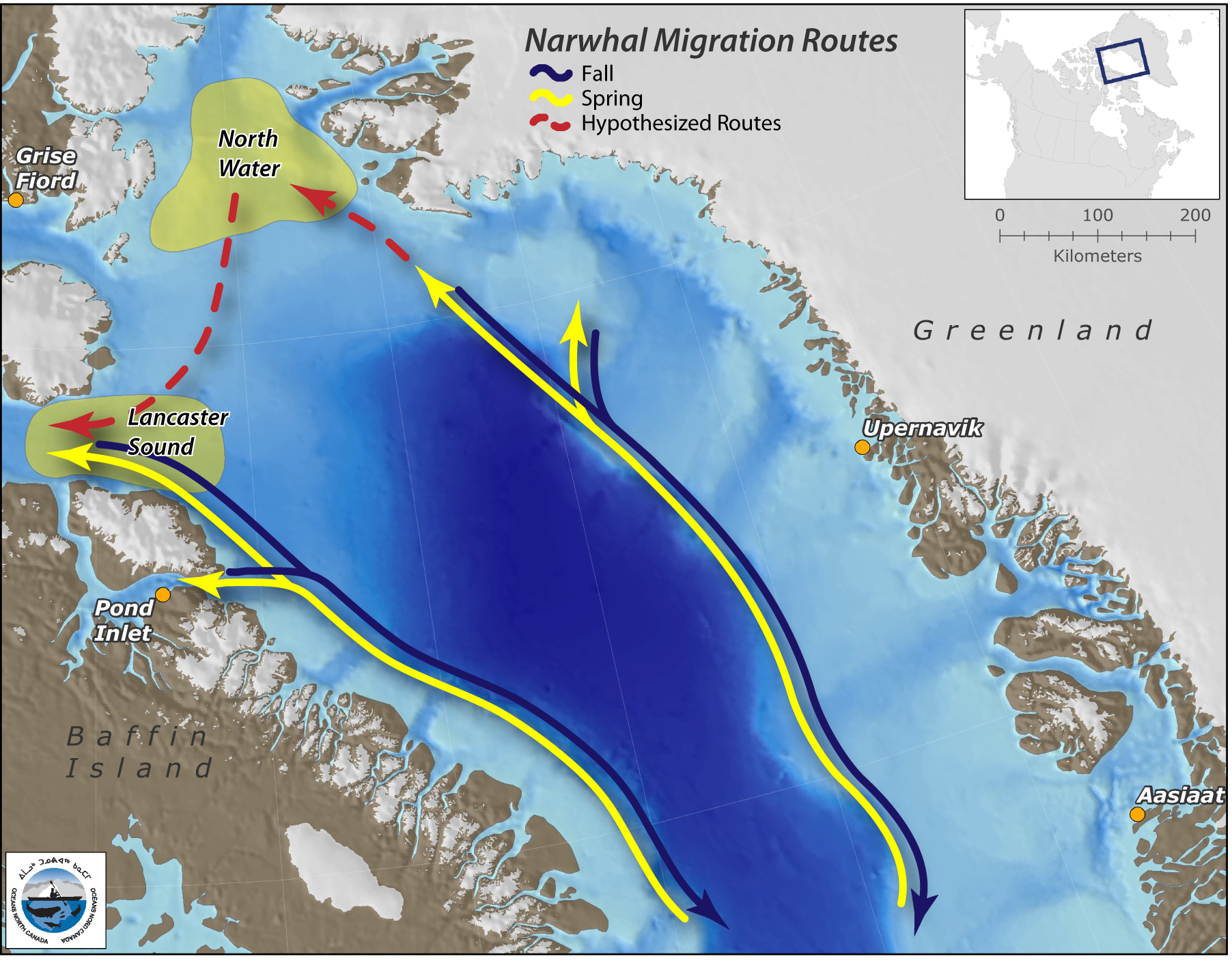 Narwhal, Belugas and Bowhead Whales   The Pew Charitable Trusts on bird migration route maps, manatee migration route maps, hummingbird migration route maps, killer whale migration route washington, killer whales orcas migration routes, humpback whale migration route maps, great white shark migration pattern maps, killer whales migrating path, killer worm harness walleye,