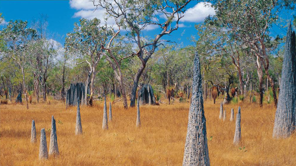 Termite mounds mark the landscape of the tropical savanna in Mungkan Kandju National Park.