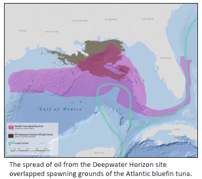 Deepwater Horizon oil spill spread