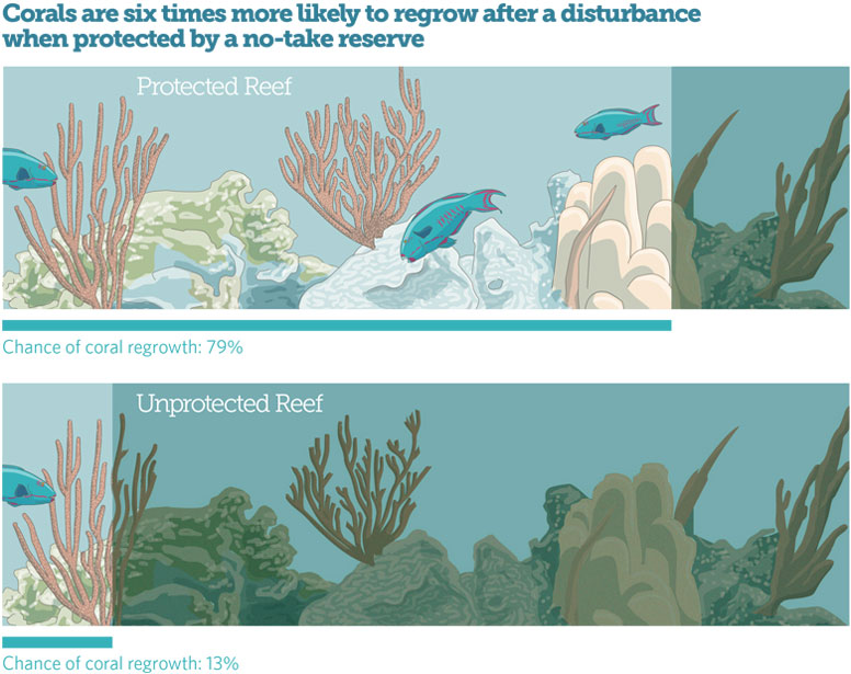 No-Take Marine Reserves Make Coral Reefs More Resilient