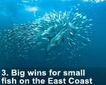 2012-small-fish-east-coast-150-lw