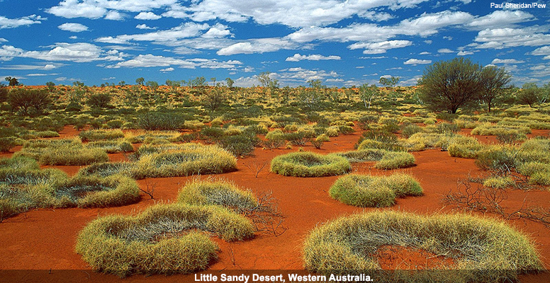 Little Sandy Desert