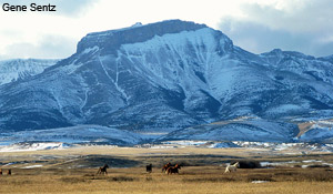 Rocky Mountain Front Heritage