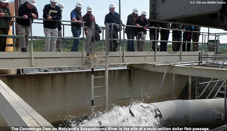 The Conowingo Dam on Maryland's Susquehanna River is the site of a multi-million dollar fish passage.
