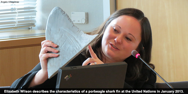 Identifying shark fins