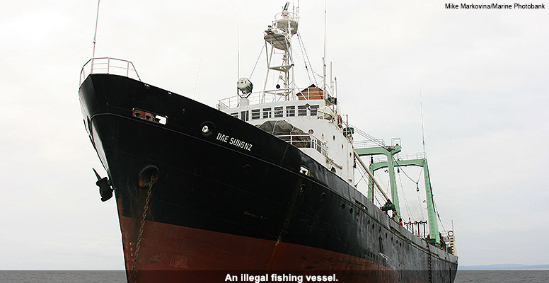 Illegal fishing vessel
