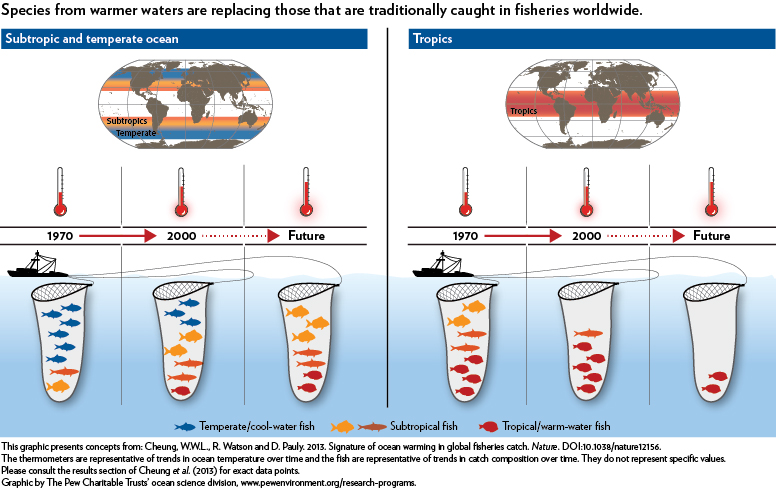 Species from warmer waters are replacing those that are traditionally caught in fisheries worldwide.