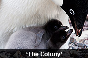 'The Colony'