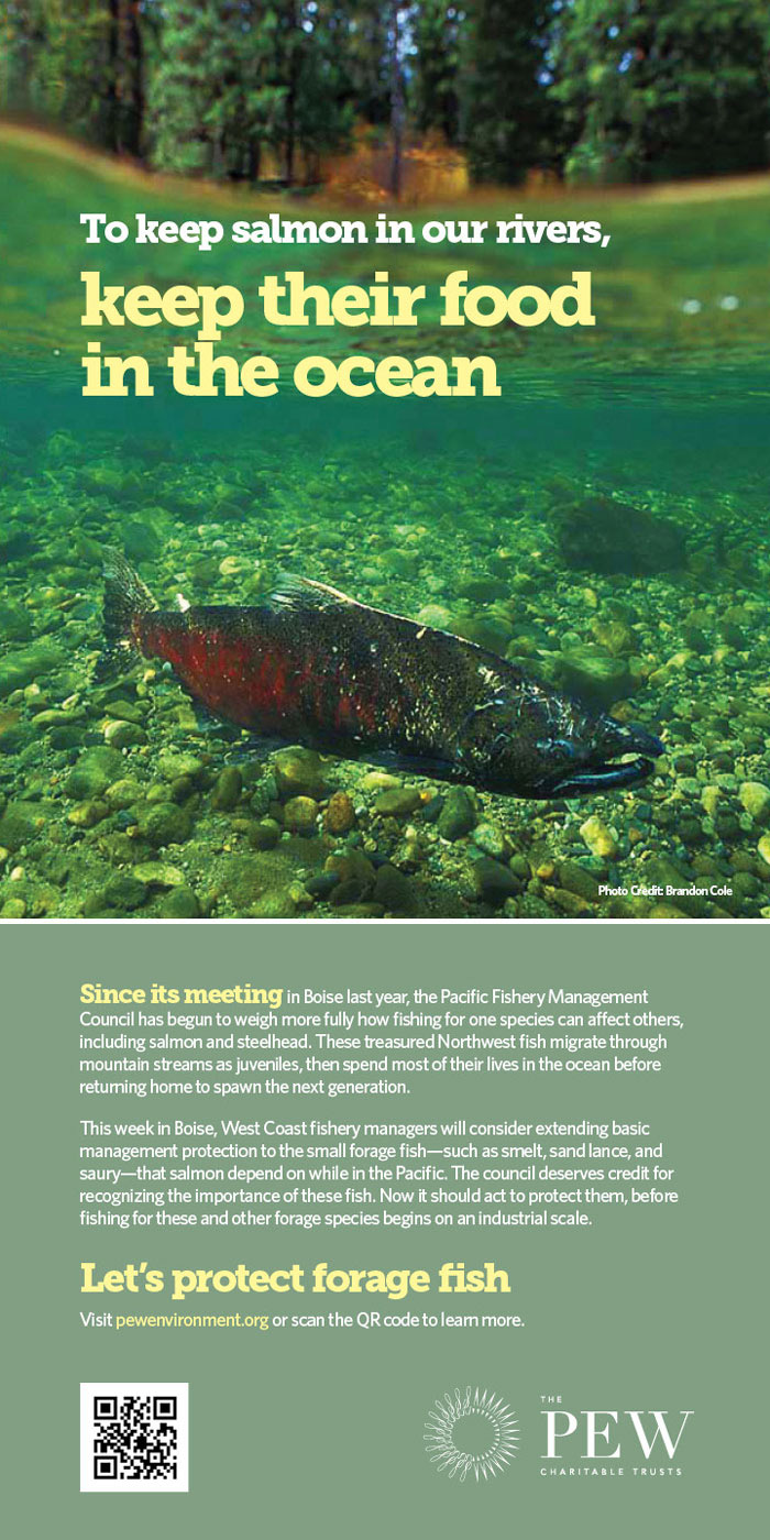 To keep salmon in our rivers, keep their food in the ocean.