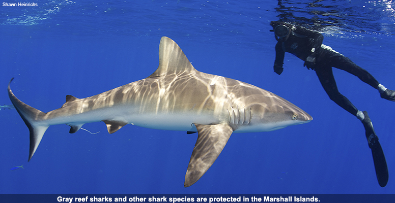 Gray reef sharks and other shark species are protected in the Marshall Islands.