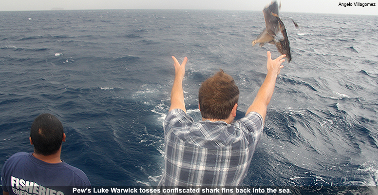 Pew's Luke Warwick tosses confiscated shark fins back into the sea.