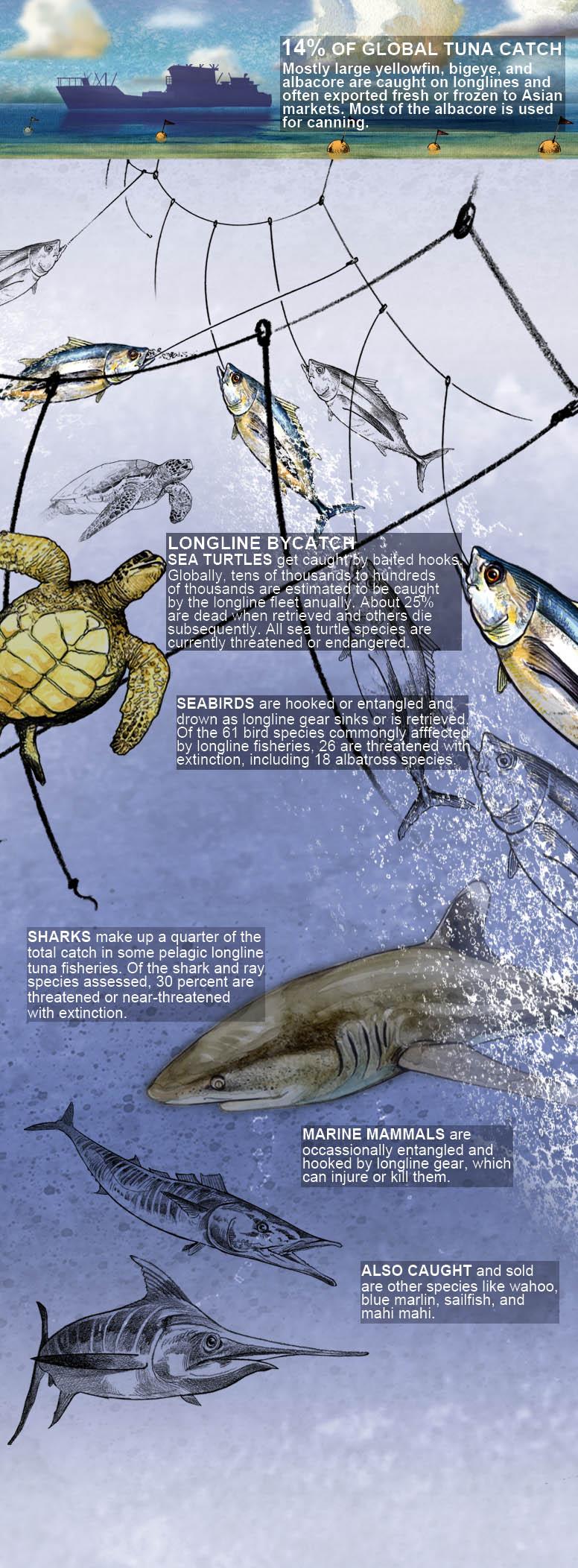Global Tuna Fishing | The Pew Charitable Trusts