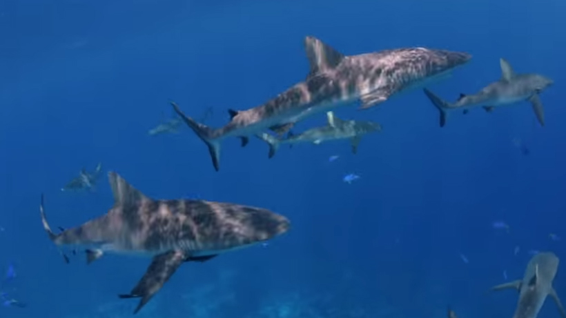Marshall Islands: The World's Largest Shark Sanctuary