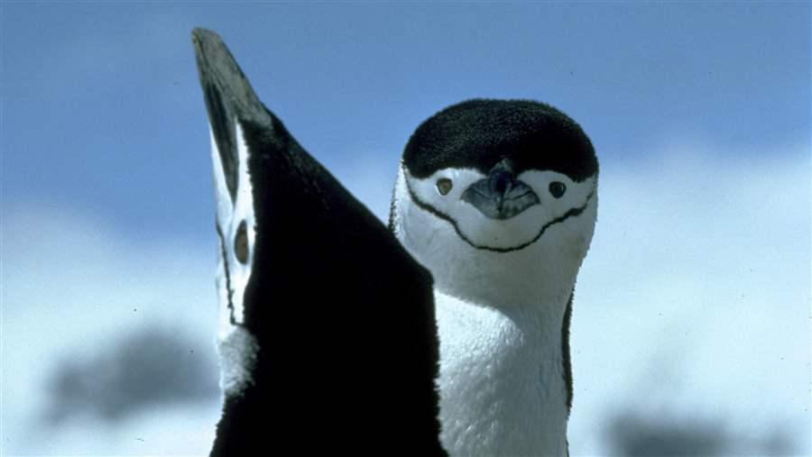 33 Antarctic Species We Love and Must Protect: Part 2