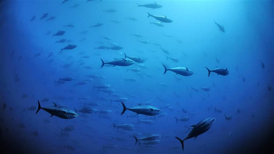 Atlantic Bluefin Tuna