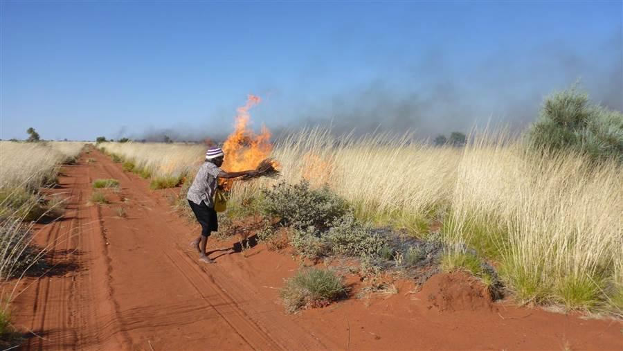 Burning spinifex to control wildfire and improve habitat for small mammals and food plants.