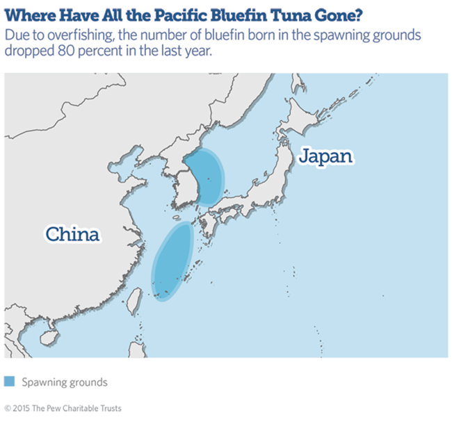 Where have all the Pacific Bluefin tuna gone?