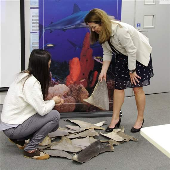 Shark expert Debbie Abercrombie, right, and a workshop participant examine shark fins.