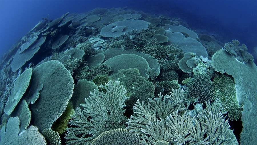Coral reefs in Rapa, Austral Islands.