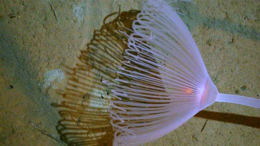 Let S Protect Deep Sea Ocean Floor Habitat Along The U S
