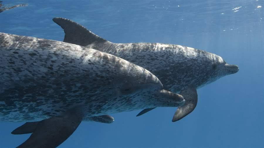 protecting ocean life on the high seas the pew charitable trusts