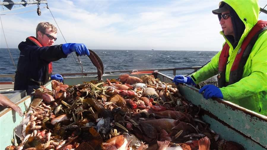 NOAA scientists study catch.