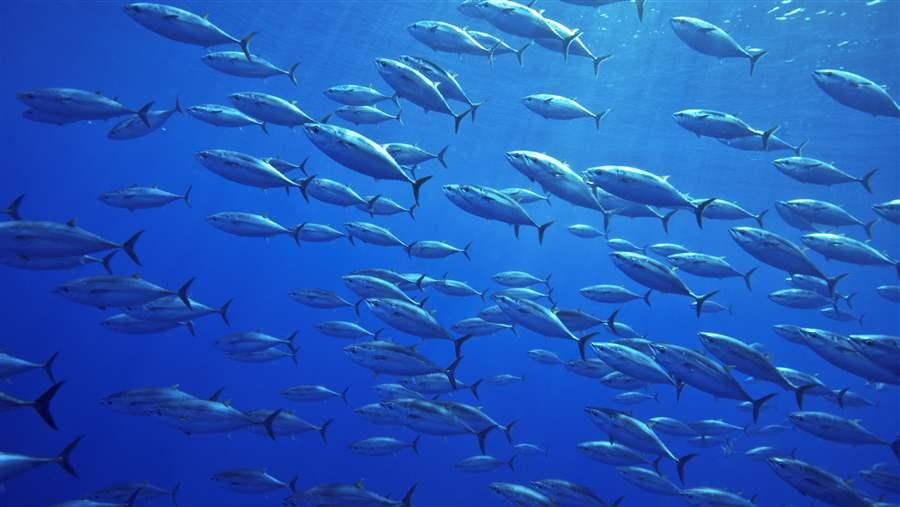 Bluefin tuna populations need a chance to rebuild.