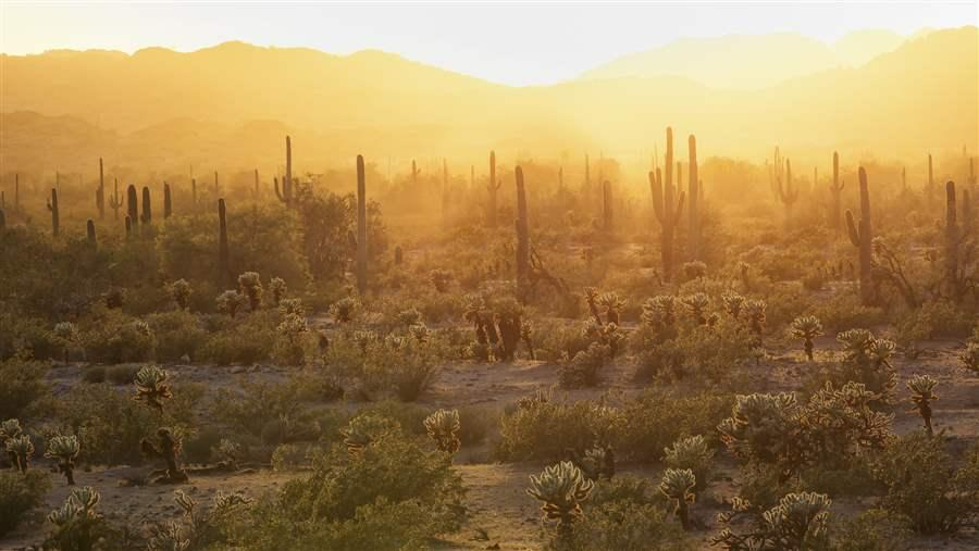 The Sonoran Desert National Monument contains more than 487,000 acres of desert landscape