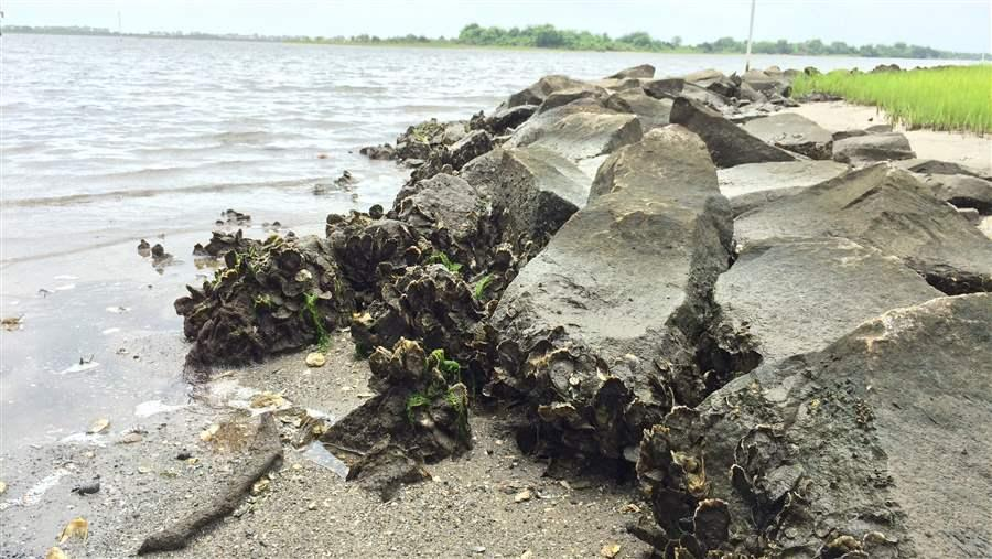 Natural coastal defenses are vital in storm protection efforts