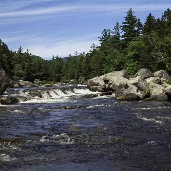 Forests and rivers in Maine and Oregon