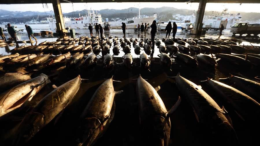 Japan Vows to Close Ports to Illegal Fishing | The Pew Charitable Trusts
