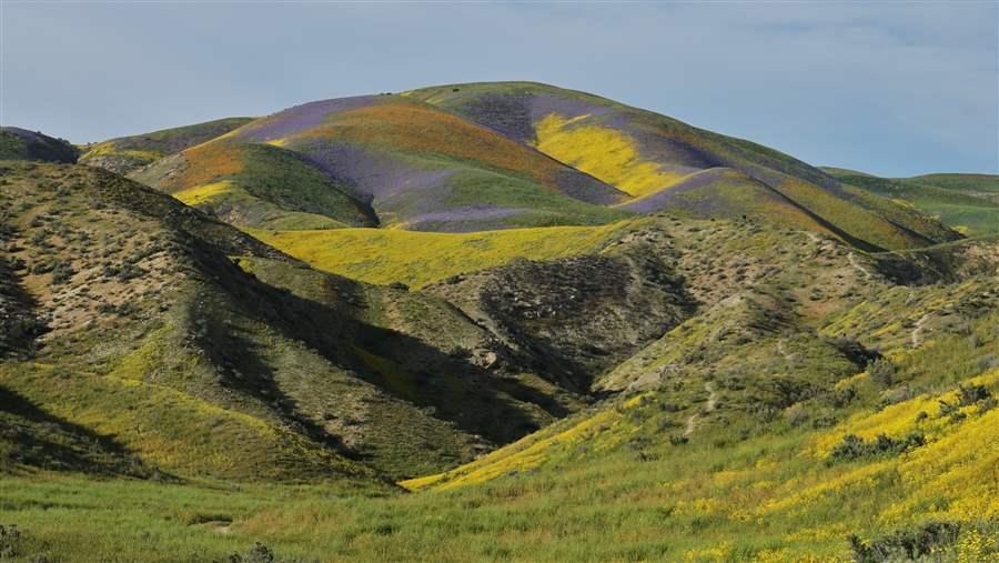Wilderness Bill Would Protect California Scenery  Habitat