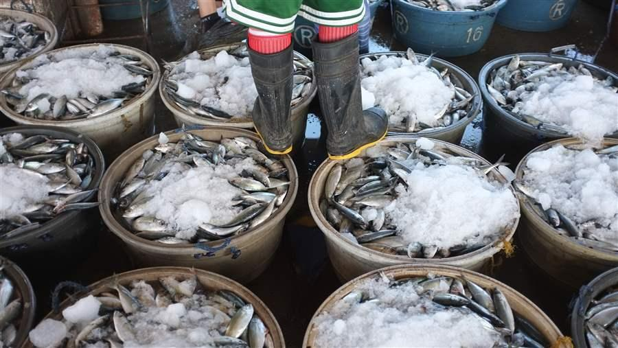 Port State Measures Agreement: Why Seafood Buyers Should Help | The