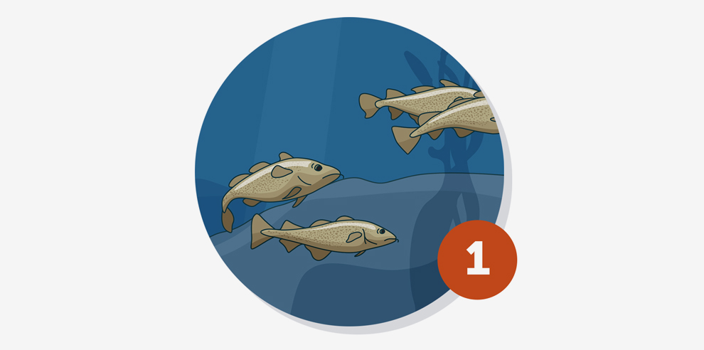 10 Reasons the EU Must End Overfishing   The Pew Charitable