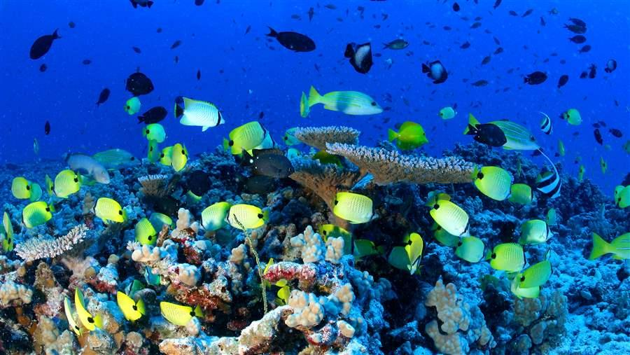 how much of the ocean is really protected the pew charitable trusts