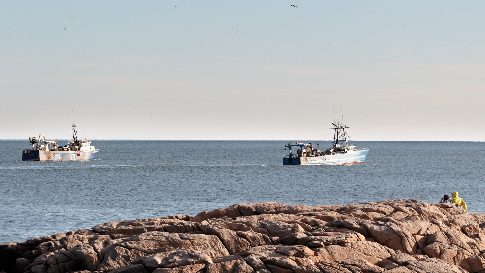 With Atlantic Herring Population Crashing, Managers Should Adopt