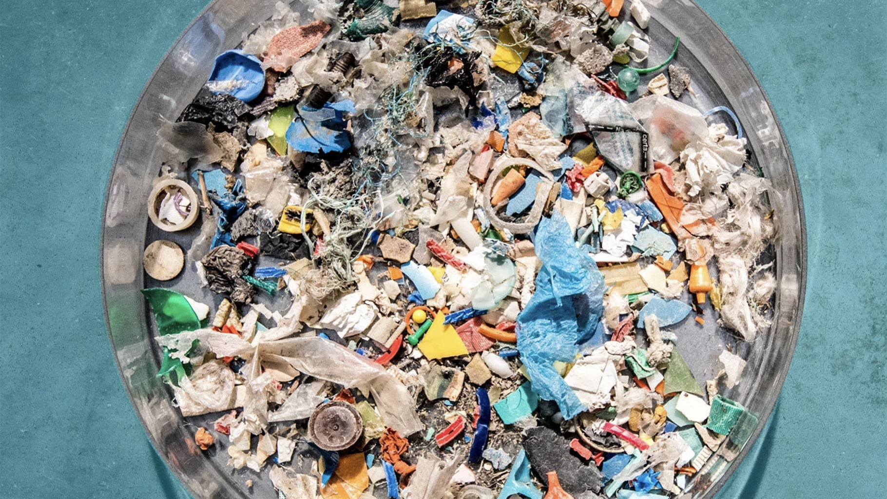 How does the plastic affect the fish essay