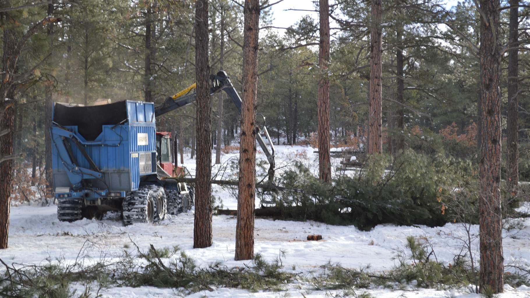 Communities Want Trees Thinned  Timber Companies Want